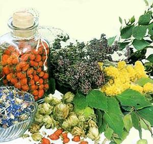 Народная медицина предлагает сборы трав от фурункулеза.